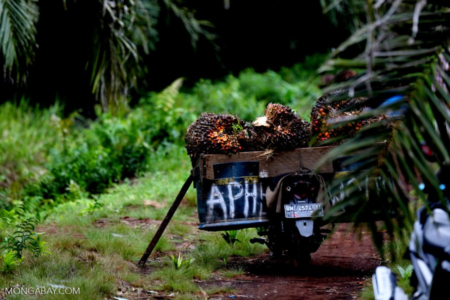 Oil palm fruit in a motorbike basket in Indonesia's Riau province. Photo by Rhett A. Butler