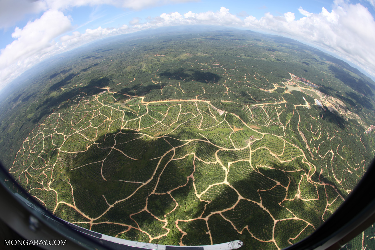 A landscape of oil palm viewed from the air in the Malaysian state of Sabah, on the island of Borneo. Photo by Rhett A. Butler