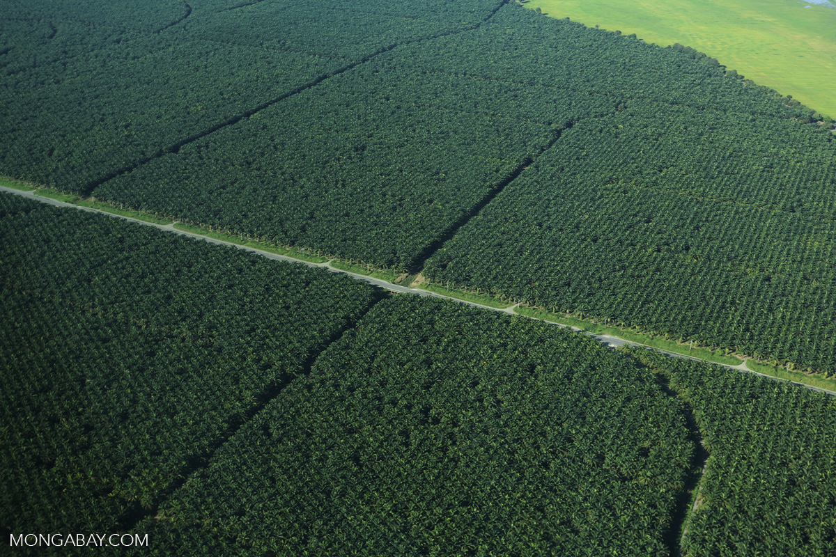 Aerial view of an oil palm estate in Costa Rica. Photo by Rhett A. Butler