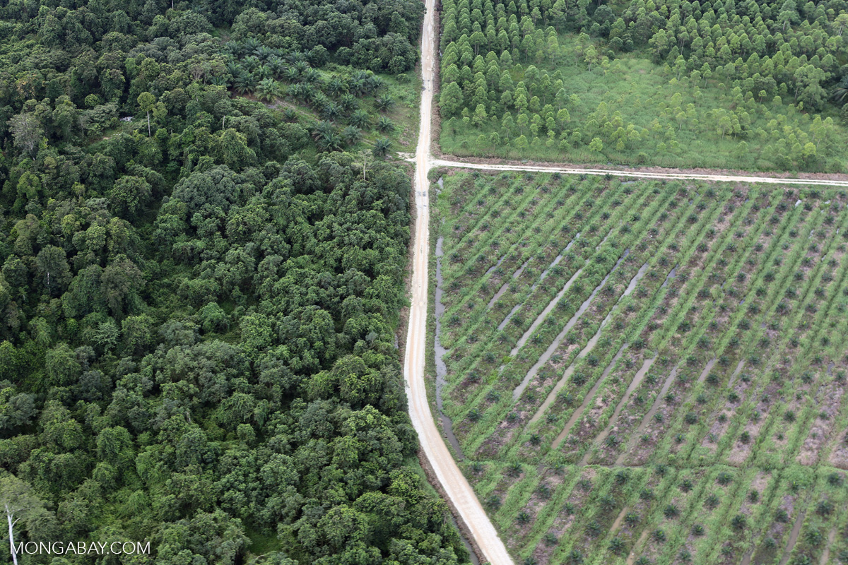 Roads divide a natural forest (left), oil palm plantation (bottom right) and timber plantation (top right) in Malaysian Borneo. Photo by Rhett A. Butler