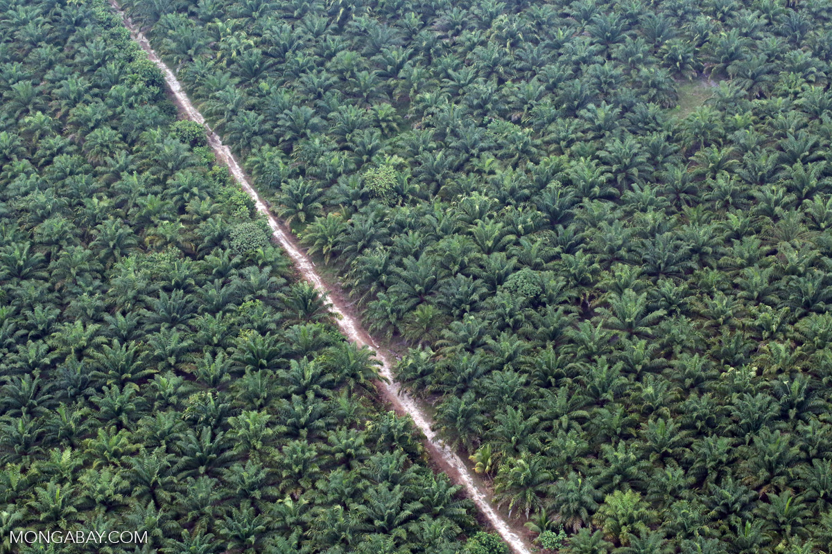 An oil palm plantation in Indonesia's Riau province. Photo by Rhett A. Butler