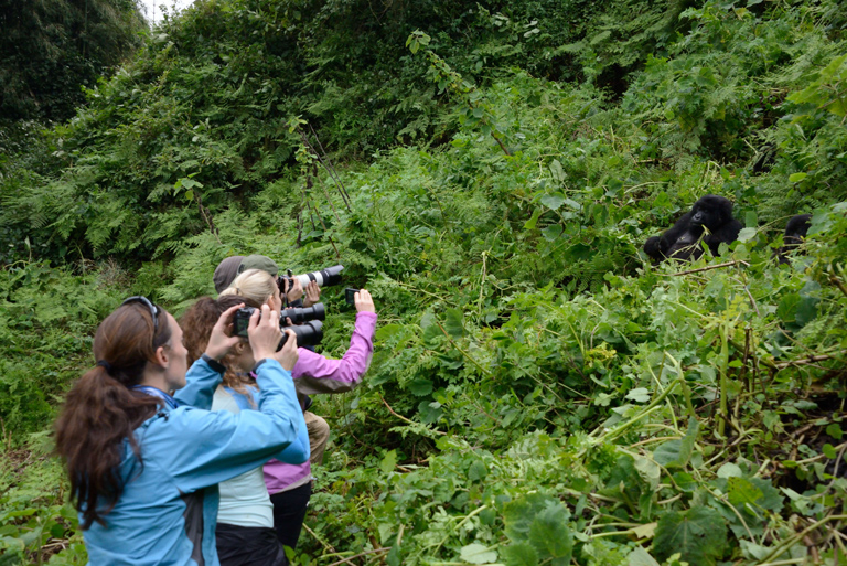 Ultra-marathoners photographing gorillas. Photos by Russ Mittermeier.
