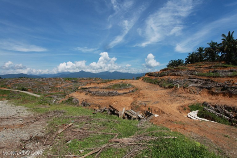 An oil palm plantation near Gunung Leuser National Park in northern Sumatra, Indonesia. Photo by Rhett A. Butler