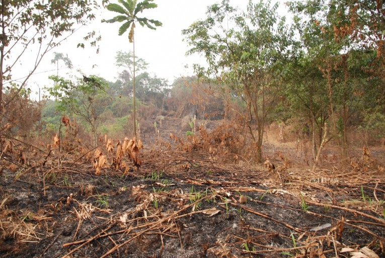 Forest recently burned in preparation for planting in Mundemba, Cameroon. Photo by John C. Cannon.
