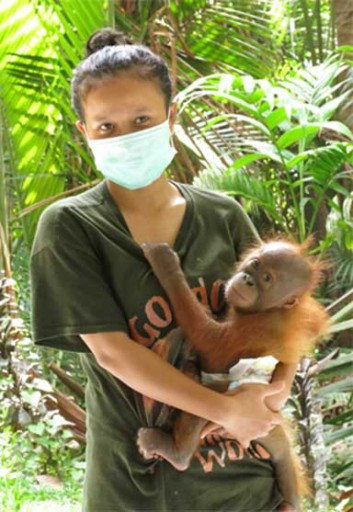 All newly rescued orangutans go through a quarantine period. Photo courtesy of SOCP