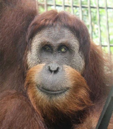 Leuser has recovered well, after being blinded by villagers and shot 62 times around his head and genitals. Photo courtesy of SOCP