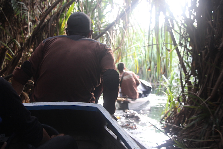 Pandan palms curtain the river path later in the BOSF rescue team's journey with three translocated orangutans. Photo by Melati Kaye.
