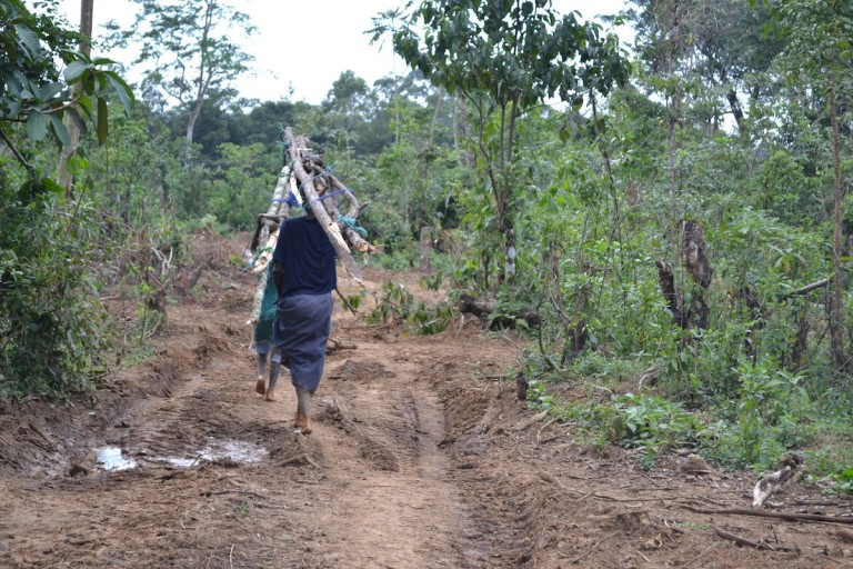 The forest is a source of fuelwood for residents. Photo by Isaiah Esipisu.