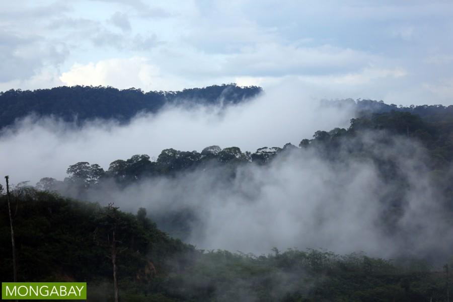 Sarawak rainforest in Malaysian Borneo. Photo by Rhett A. Butler.