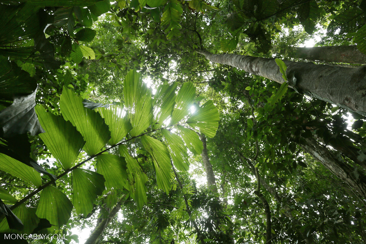 New Rainforest Alliance Head Technology Could Improve