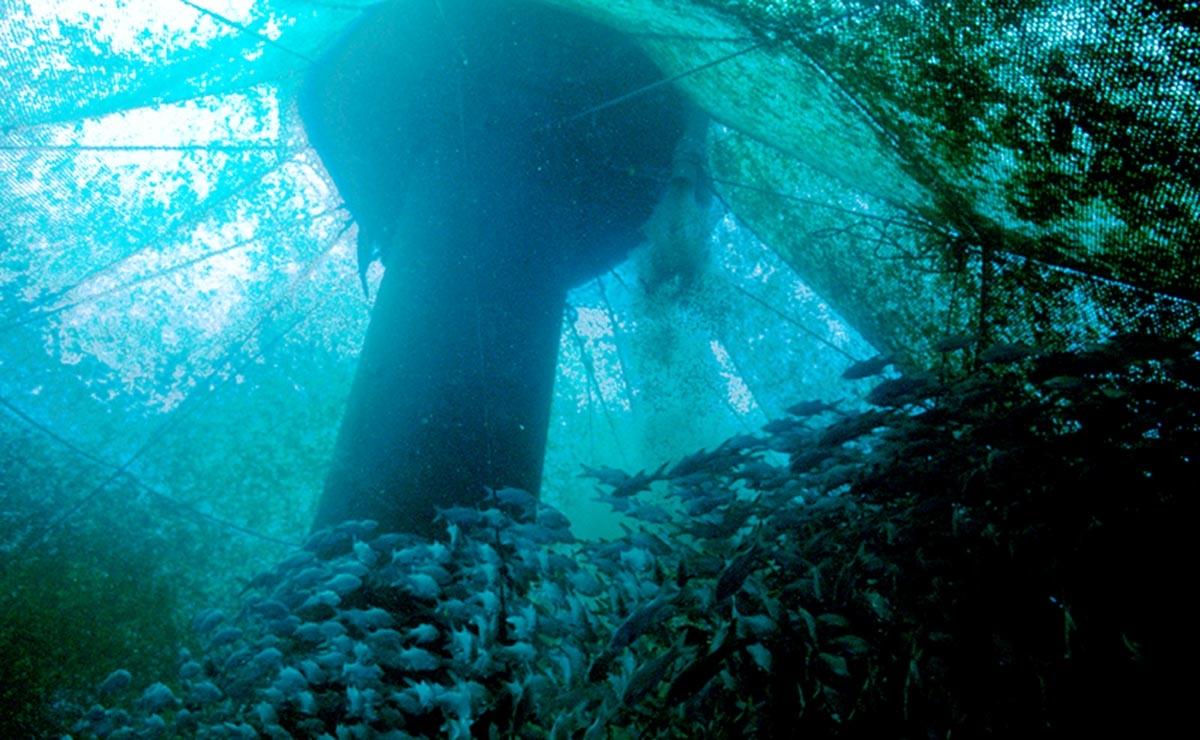 U s plan to develop offshore aquaculture stirs dissent for Aquaponics hawaii