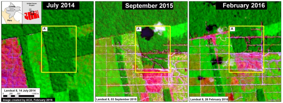 Satellite images show advancing deforestation in in the northern portion of the United Cacao project from July 2014 to February 2016. Researchers say that recent road-building could mean more deforestation is on the horizon. Image courtesy of MAAP.