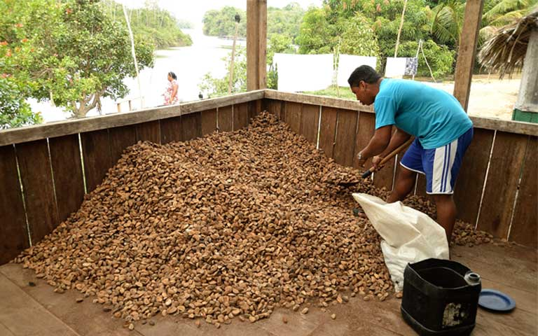 Sorting through a Brazil nut pile within view of the Iriri River. Photo by Natalia Guerrero