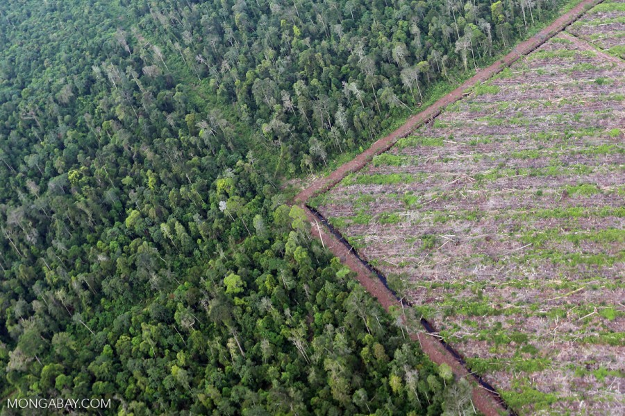 Deforestation in Sumatra, Indonesia. Photo by Rhett A. Butler for Mongabay.