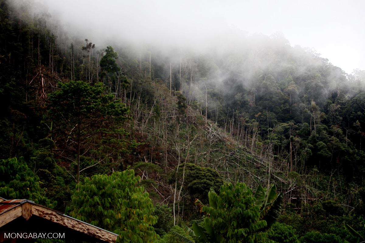 Deforestation in Mokwam, West Papua. Photo by Rhett A. Butler