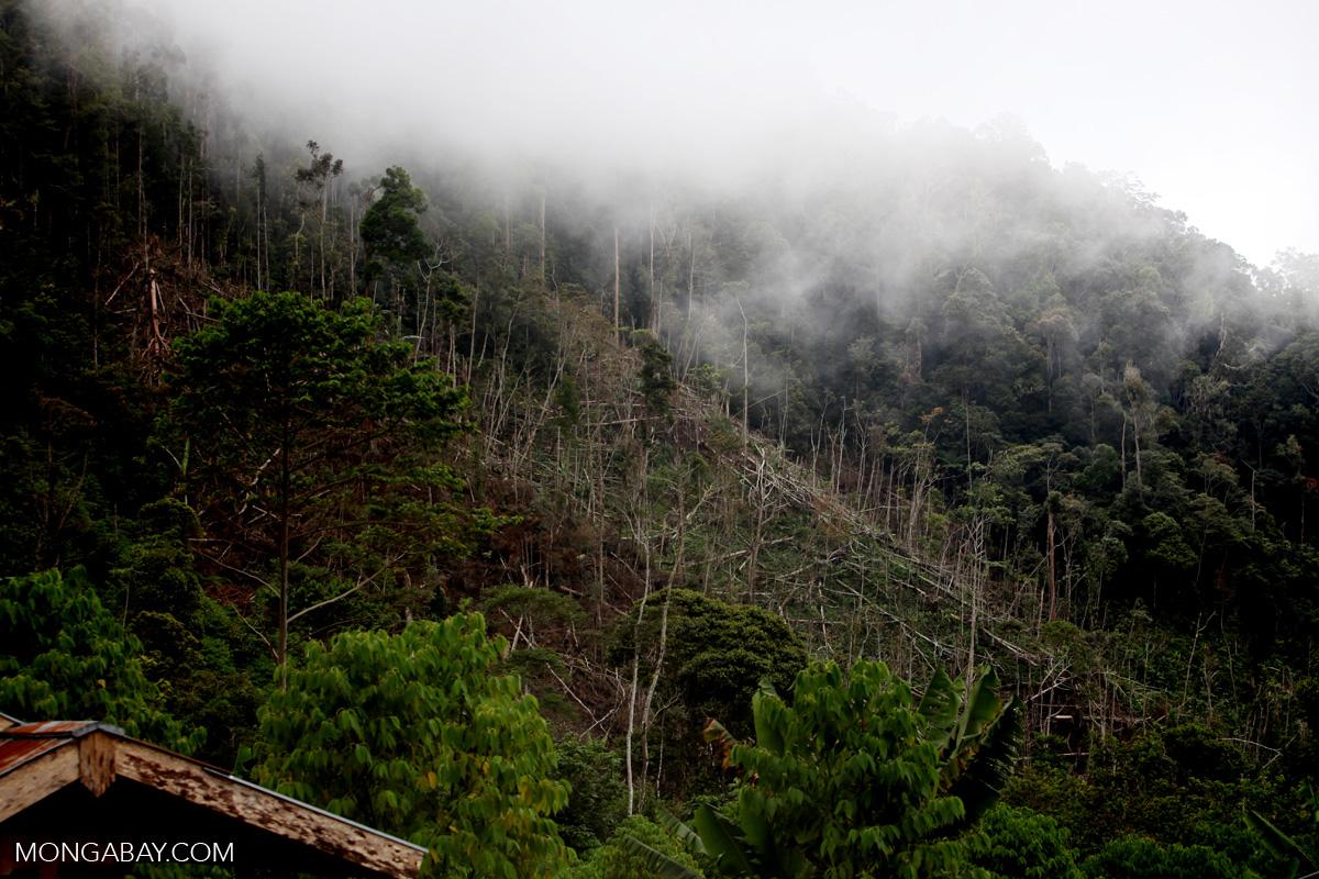 Deforestation in Mokwam, West Papua. Photo by Rhett A. Butler