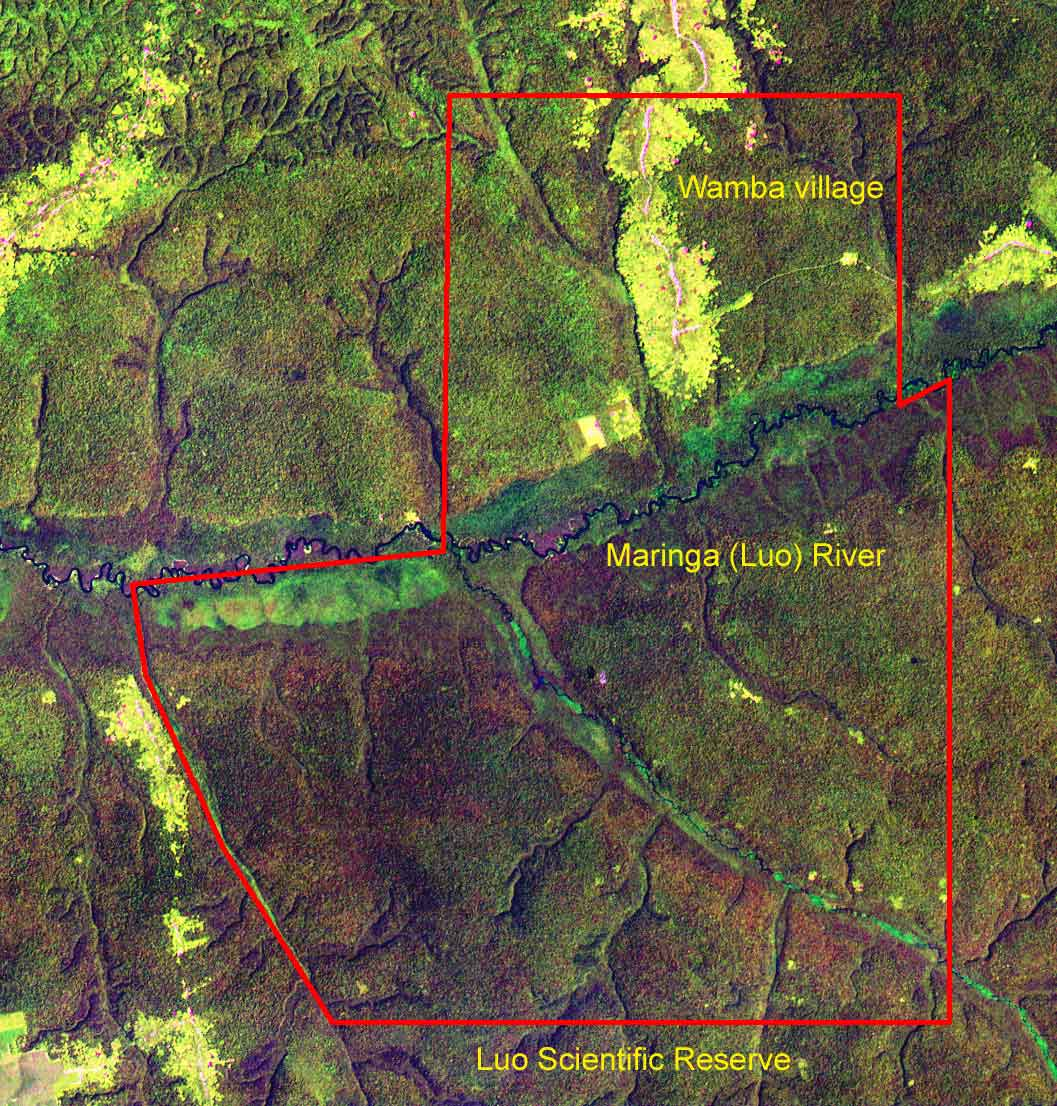 Luo Scientific Reserve. Yellow areas show secondary vegetation in and around agricultural fields. The research camp is located in the village in the northern section of the reserve. Map by Takeshi Furuichi