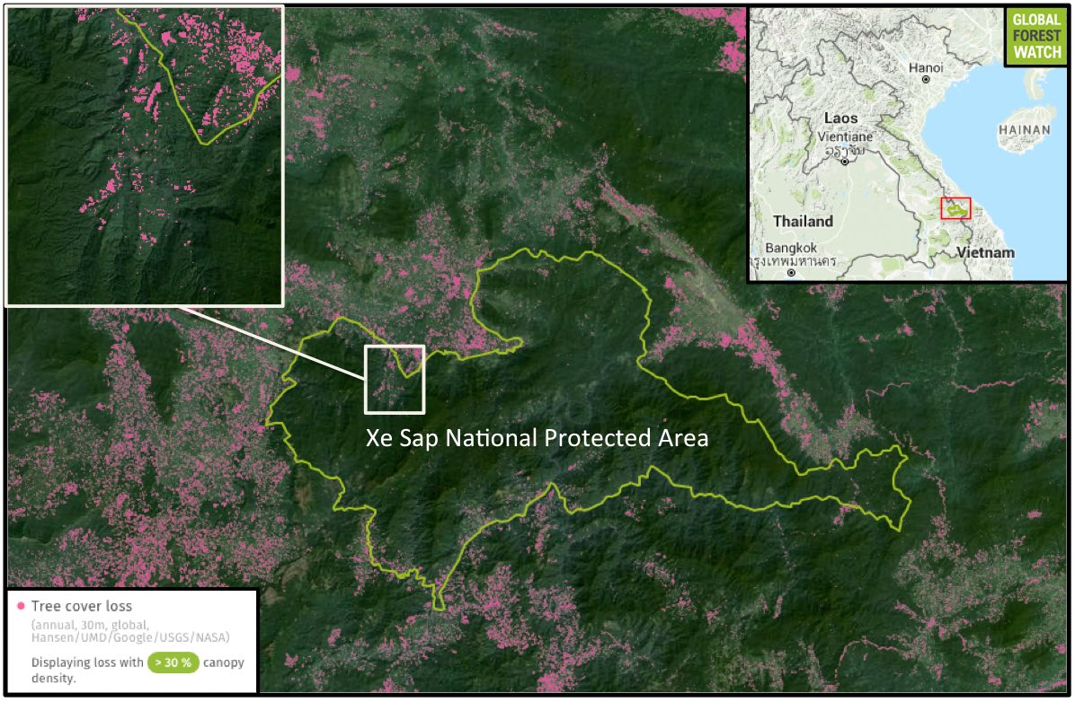 Xe Sap National Protected Area (PA) has been somewhat immune from the deforestation activities surrounding it. Still, the PA lost nearly 1,500 hectares of treecover loss from 2001 through 2014. Data indicate deforestation may be on the upswing, with tree cover loss rates climbing between 2009 and 2014. Ownston's civets were found by camera traps in the western portion of Xe Sap, which has seen an increase in deforestation around its edges and into its valleys.