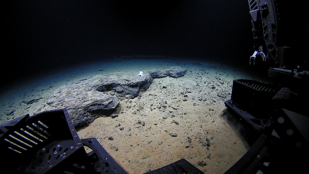 ROV Deep Discoverer approaches the unknown octopod at 4,290 meters depth.   Courtesy of the NOAA National Marine Fisheries Service