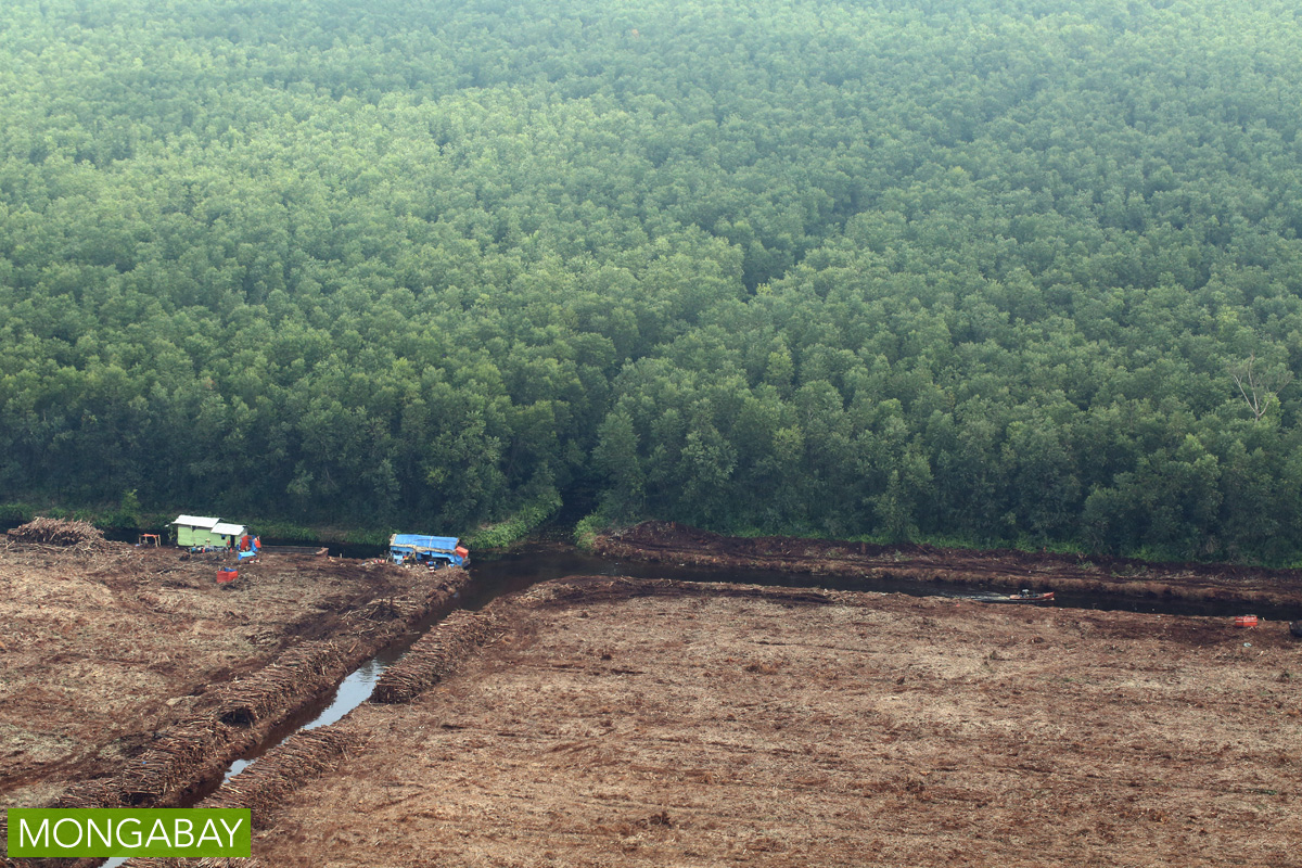 Drainage canals bisect a peatland, part of which has been planted with acacia pulpwood, in Riau, Indonesia. Photo by Rhett A. Butler