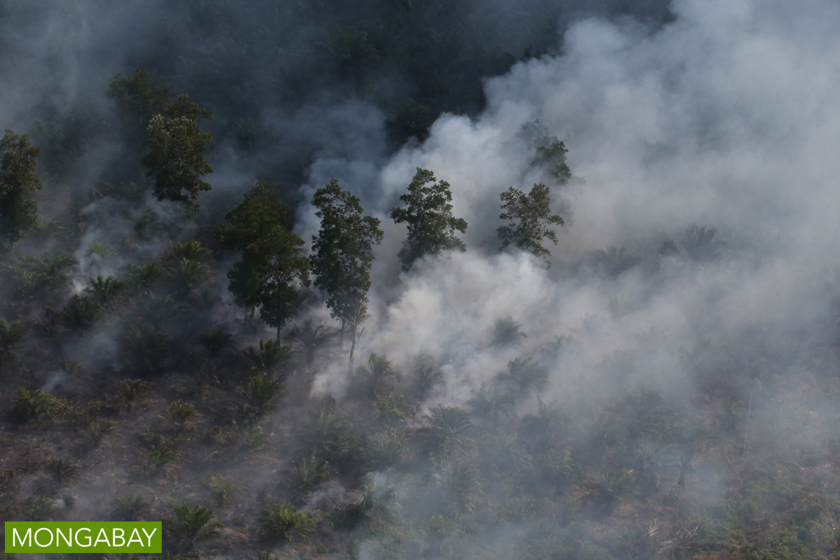A peatland planted with oil palm burns in Indonesia's Riau province, on the island of Sumatra, in 2015. Photo by Rhett A. Butler