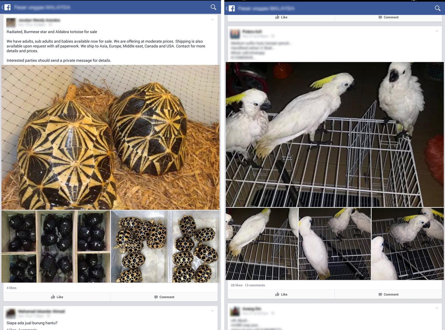 Advertisements for birds were most common, followed by reptiles and mammals. Photos courtesy of TRAFFIC.