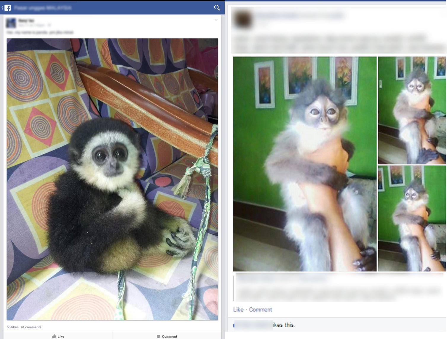 Left: White-handed Gibbon for sale in November 2014, Right: Banded Langur for sale in February 2015. Photos courtesy of TRAFFIC.
