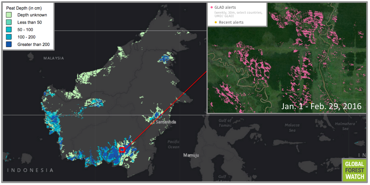 Despite a pledge by Indonesian president Joko Widodo to protect peatlands from further draining and development, GLAD detected heavy tree cover loss in one one of the deepest peatlands on the island. Drainage canals are visible in satellite imagery.