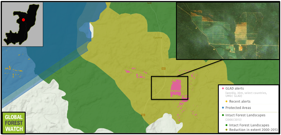 Activity has been ramping up in a palm oil concession owned by Atama. GLAD data show around 1,300 alerts were reported in the concession between January 2015 and March 2016. Odzala Kokoua, just a few kilometers from the palm oil development, also shows tree cover loss with in its borders within the past two weeks.