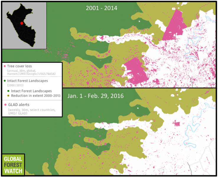 In the last decade, two large palm oil plantations have become established near Pucallpa, Peru. The new GLAD data shows there has been significant recent recent activity of the northern plantation, which expanded by around 400 hectares in 2015.