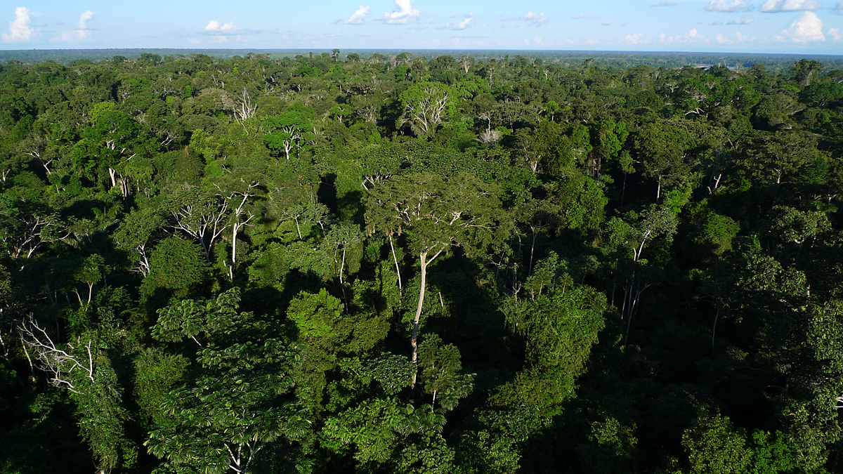 In Peru's Madre de Dios, the forest stretches to the horizon in every direction. But this view is threatened by increased gold-mining (legal and illegal), oil palm and cocoa cultivations, logging and habitat conversion. Photo by Caroline Chaboo.