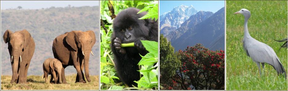 Photo collage for biodiversity