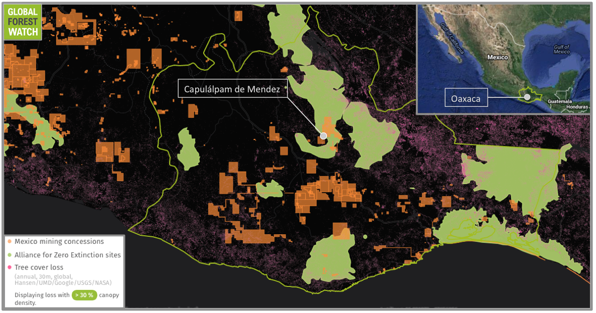 More than half the state of Oaxaca is covered with dense forest. But data from the forest monitoring platform Global Forest Watch (GFW) show loss has been occurring in recent years, concentrated in the southeastern portion of the state. Oaxaca is also home to a large number of critically endangered species found nowhere else in the world. The Alliance for Zero Extinction (AZE) lists a total of 38 of these species in Oaxaca -- 22 of which inhabit one AZE site bordering Capulálpam de Mendez.
