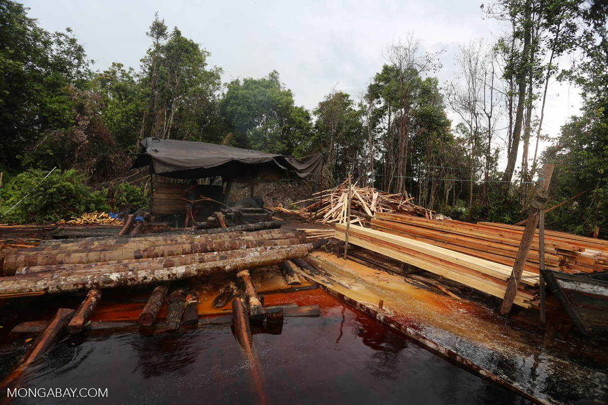 An illegal logging operation in Indonesia's Central Kalimantan province. Photo by Rhett A. Butler