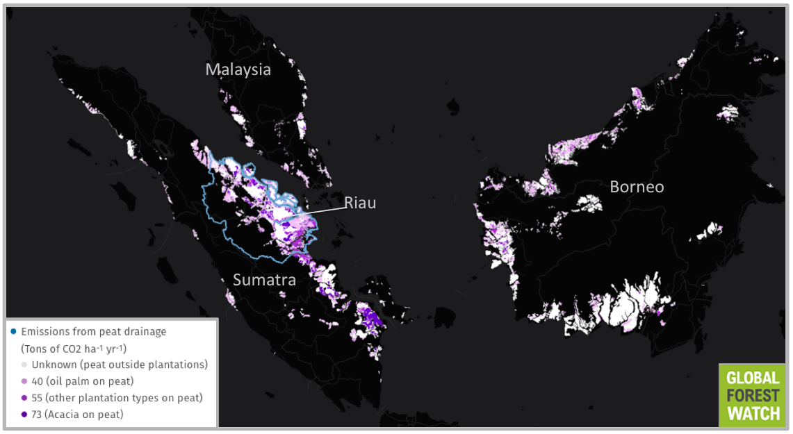 Most of Indonesia's peatland emissions are concentrated in Borneo and Sumatra - with the Sumatran province of Riau showing particularly high levels of CO2.