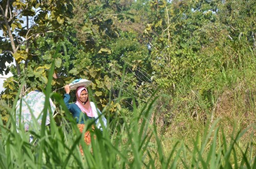 An indigenous Enrekang woman traverses the forest, considered a sacred space. Photo by Wahyu Chandra/Mongabay