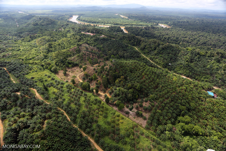 Oil palm near the Kinabatangan River in Sabah, Malaysian Borneo. Photo by Rhett A. Butler.