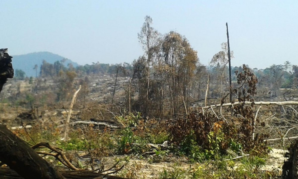 An area of recent deforestation in the Ly Yong Phat Group concession area in Botum Sakor National Park. Koh Kong province in Southwest Cambodia contains some of the most intact forests in Southeast Asia and is home to a plethora of rare species. The forests are under attack from multiple pressures bringing forest dwelling people into conflict with those exploiting the natural resources. Photo by Rod Harbinson.