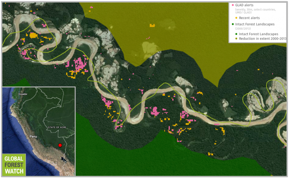 GLAD alerts from the University of Maryland show significant tree cover loss within Tambopata National Reserve (the area under the green line) between February 1 and April 8 of this year. The orange alerts occurred in just the first eight days of April.