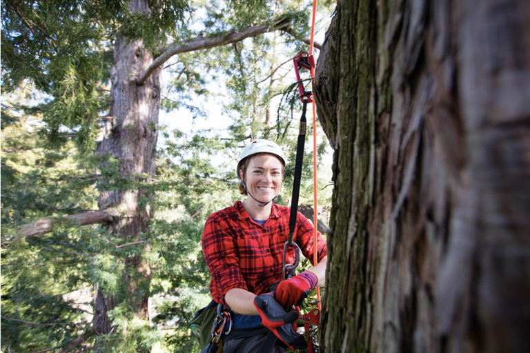Tina Butler in a redwood tree
