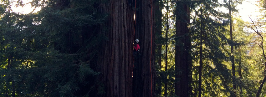 tree-hugging_850x310