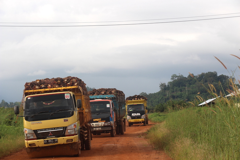 Trucks transport oil-palm fruit in PT Kayung Agro Lestari's plantation in West Kalimantan.