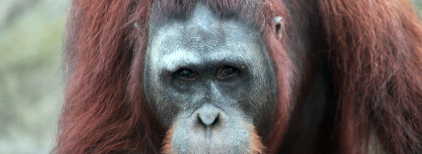 Will there really be enough sustainable palm oil for the whole market?