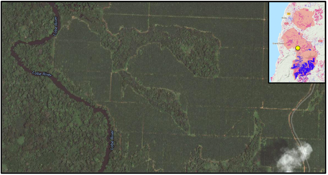 Satellite imagery shows large monoculture tree plantations in one of SOCAPALM's oil palm concessions.