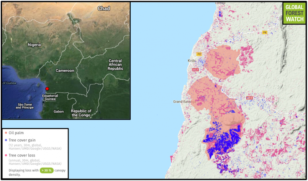 Vast SOCAPALM plantations flank Cameroon's southern port city of Kribi. Satellite data on tree cover loss and gain indicate high levels of activity in the concessions since data collection began in 2001.