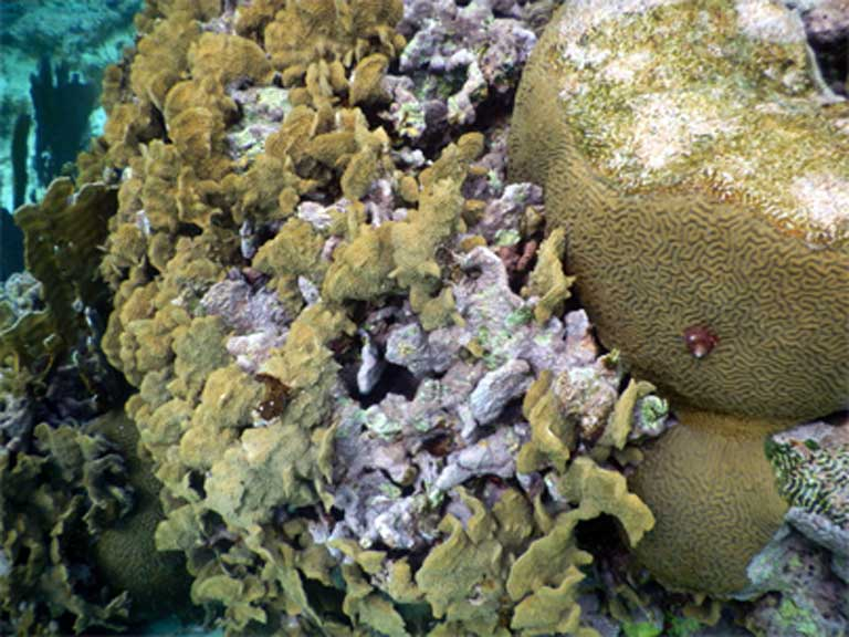 Struggling lettuce and brain coral. Photo by Justin Catanoso