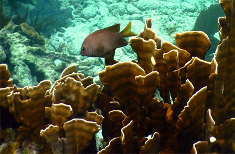 Large schools of fish on the reef are in decline due to overfishing. Photo by Justin Catanoso