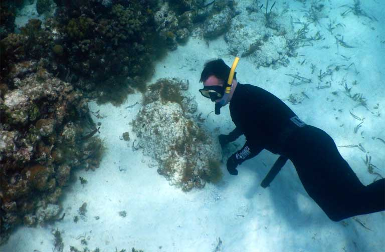 Miles Silman examines a stressed portion of Lighthouse Reef. Photo by Justin Catanoso