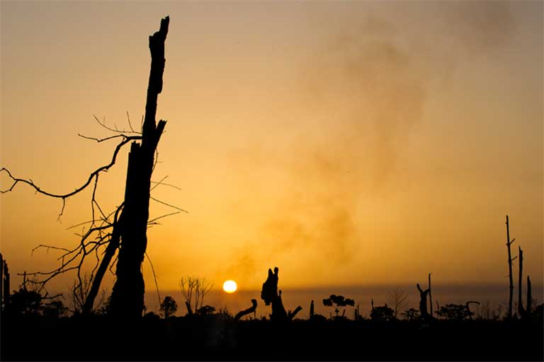 Once a great forest filled with wildlife, now only charcoal remains as the sun sets over the Tripa Peat swamp forest. Photo by Paul Hilton