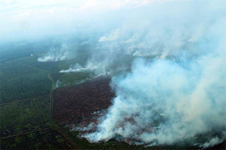 Fires in Tripa outraged people around the globe, helping to put pressure on the Indonesian government to vigorously prosecute oil palm companies for environmental crimes. Courtesy of the Sumatran Orangutan Conservation Programme